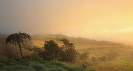 Картинки природа, пальмы, лес, поле