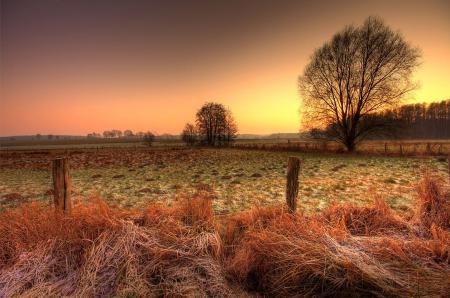Фото дерево, поле, сухая, трава