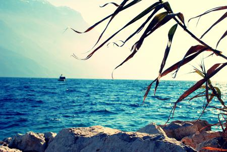 Фото пейзаж, природа, ветка, океан