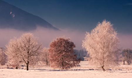 Фото пейзаж, природа, лес, деревья