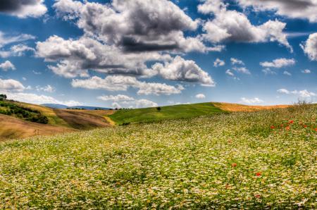 Обои поле, ромашки, поля, небо