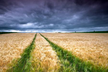 Обои поле, небо, след, облака