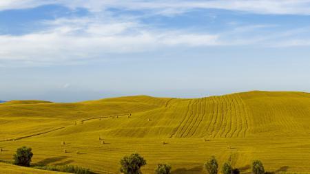 Фотографии поле, холмы, деревья, небо