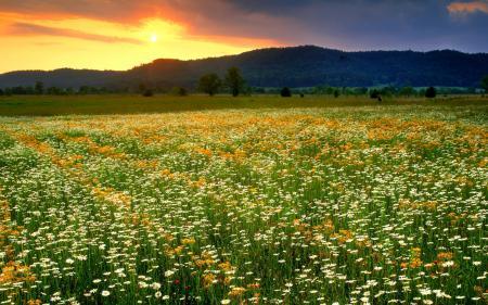 Картинки природа, пейзаж, цветы, поле