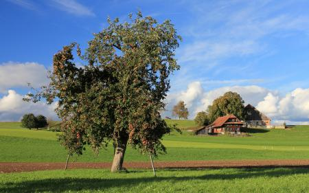 Фото поле, дом, дерево
