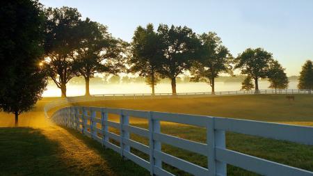 Фотографии луг, забор, лошадь, деревья