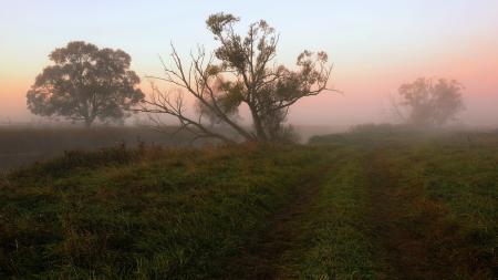 Фото утро, туман, поле, дерево