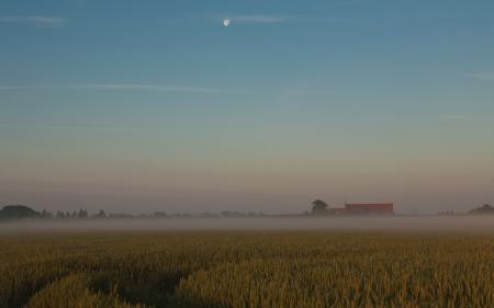 Фотографии поле, туман, закат