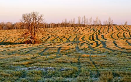 Картинки утро, поле, осень