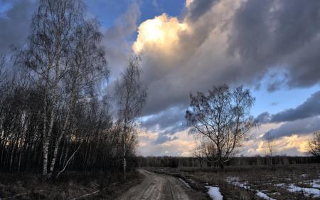 Фотографии весна, дорога, деревья, природа