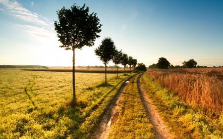Картинки дорога, поле, деревья, пейзаж