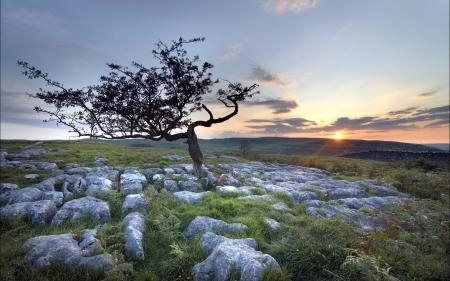 Фотографии поле, дерево, камни, закат