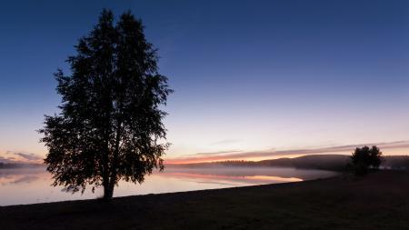 Обои сумерки, туман, небо, деревья