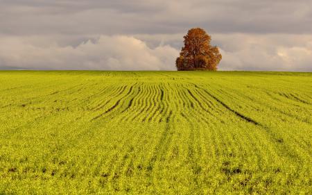 Заставки поле, дерево, пейзаж, природа