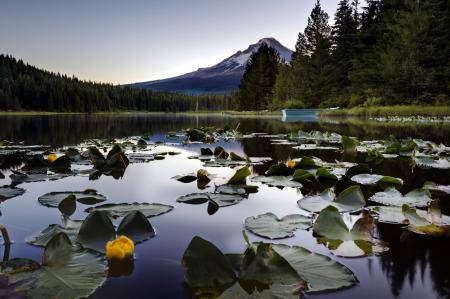 Картинки озеро, лилии, гора, природа