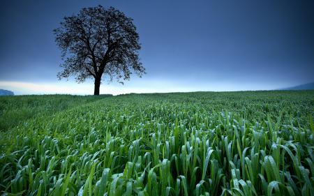 Фотографии поле, дерево, небо, природа