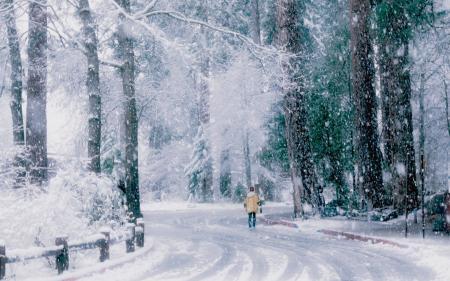 Заставки зима, снег, дорога, деревья