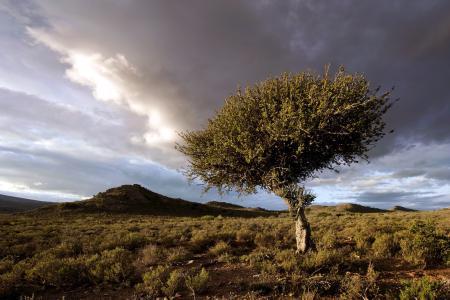 Заставки поле, дерево, небо, природа
