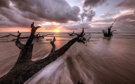 Заставки море, закат, дерево, пейзаж