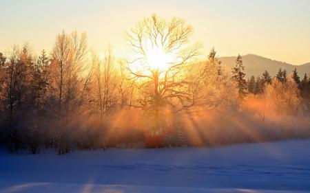 Фото зима, утро, деревья, свет