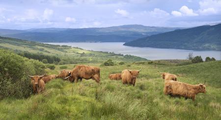 Фото Шотландия, высокогорье, озеро, пастбище