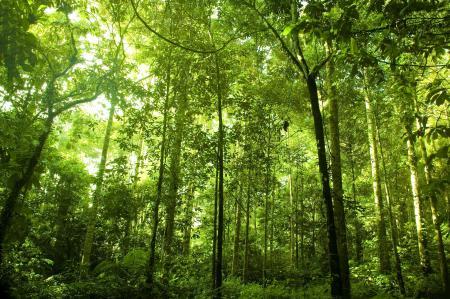 Фото Rainforest, густой, лес, высокие