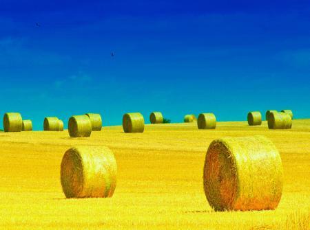 Картинки небо, поле, роллы