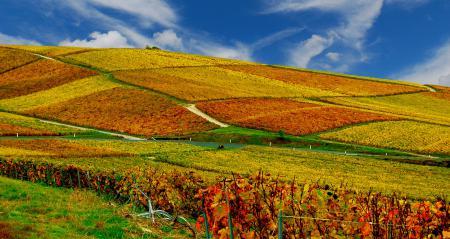 Картинки осень, вноградники, поля, небо