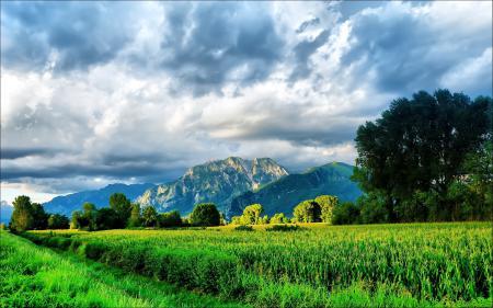 Фотографии Природа, трава, небо, горы