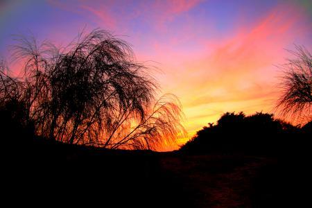 Картинки вечер, закат, дерево, темнота