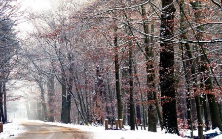 Фото зима, снег, дорога