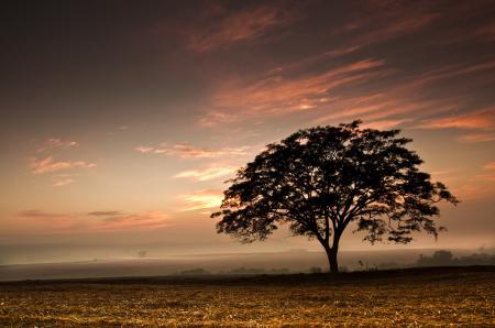 Картинки дерево, поле, закат, небо