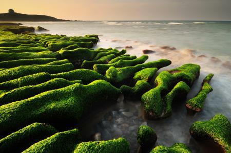 Обои море, камни, водоросли