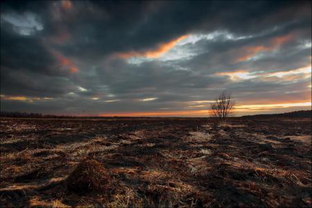 Фото поле, пожар, небо, дерево