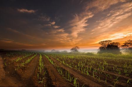 Картинки утро, поле, небо, туман