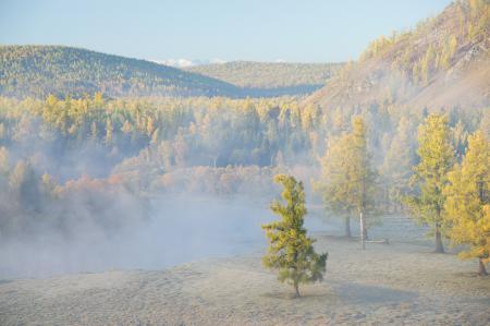 Картинки туман, дерево, пейзаж