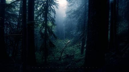 Картинки лес, таинственно, темно, чаща