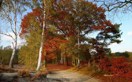 Фото осень, дорога, деревья, цвет