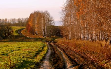Картинки осень, поле, дорога, берёзы
