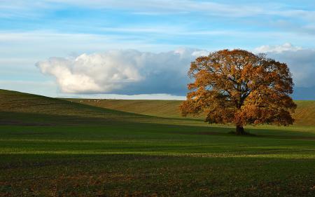Обои Природа, поле, дерево, осень