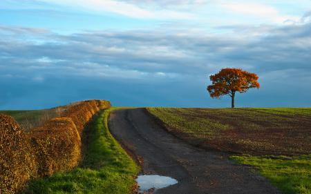 Заставки Природа, поле, дерево, дорога