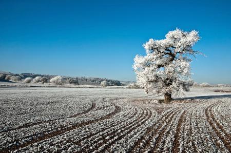 Обои Природа, пейзаж, поле, дерево