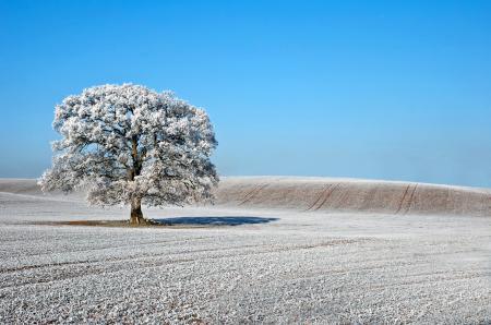 Фото Природа, поле, дерево, иней