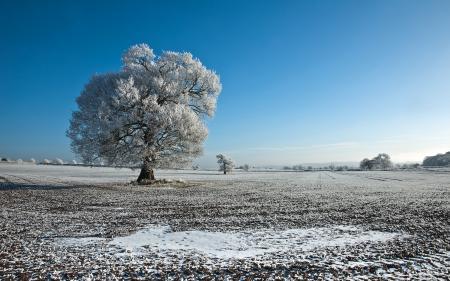 Картинки Природа, пейзаж, поле, дерево