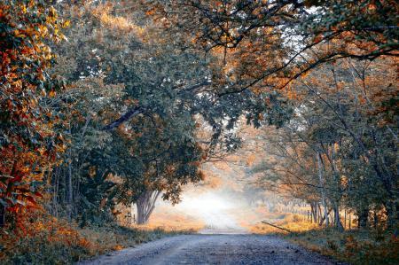Фото дорога, деревья, пейзаж