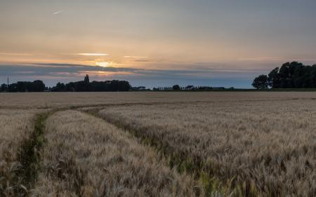 Заставки ночь, поле, колосья, пейзаж