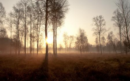 Обои деревья, туман, закат, пейзаж