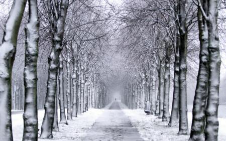 Картинки деревья, парк, зима