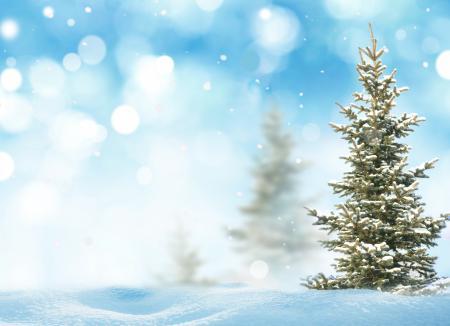Обои ёлка, снег, боке