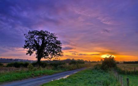 Фотографии закат, дорога, дерево, пейзаж